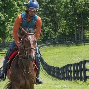 Equestrian-0240