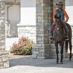 Equestrian-0141