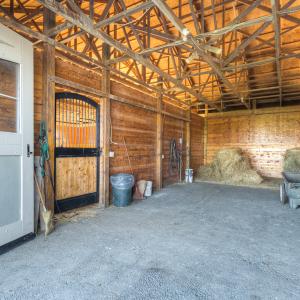 Equestrian-0389