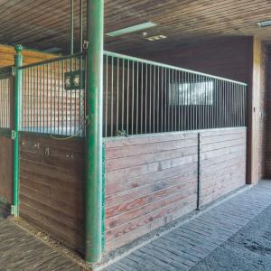 Equestrian-0399