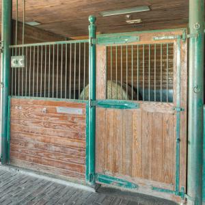 Equestrian-0401